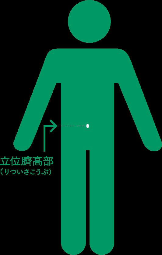 立位臍高部(りついさこうぶ)